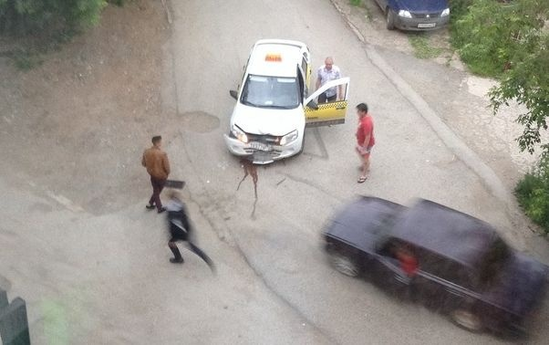 Нарушитель скрылся с места ДТП